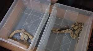 Gefährliche Liebschaften: Krokodil, Schlange & Co als Haustier | WDR