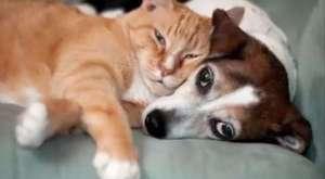 Kedi Bakımı I Kedi Sahipleneceklere Öneriler I Aşılar I Kısırlaştırma