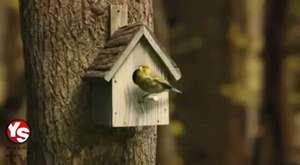 Kuş yuvasının içini merak edenler var mı Cevabı bu videoda gizli