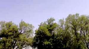 Mansur Ark-Sende Bizdensin(2009)