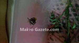 Kelebeğin Kozadan Çıkış Anı