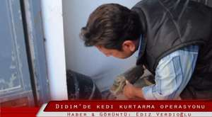 Didim'de kedi kurtarma operasyonu