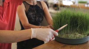 Buğday Çimi Suyu Nasıl Yapılır, Faydaları Nelerdir?