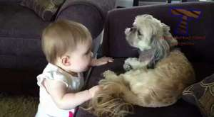 Cute dog & baby compilation