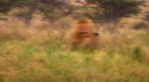 Amazon`un Katil Hayvanları