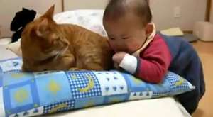 Cats Meeting Babies for the First Time Compilation 2015 [NEW HD]