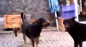 Sokak Çekimleri Köpekler