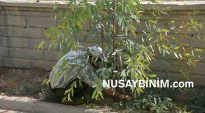 Nusaybin'de Turan ve Bulut'un çadırına taziye ziyareti