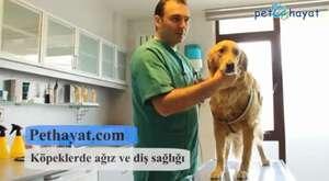 Köpeklerde Ağız ve Diş Sağlığı