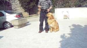 K 9 Köpek Eğitim Bakım Okulu ve Danışmanlık Hizmetleri