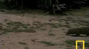 Köpeği ortadan ikiye ayırıyorlar !