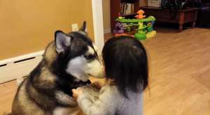 Baby Loves Siberian Husky Dog!