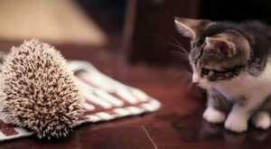 Acıkan Minik Kediler