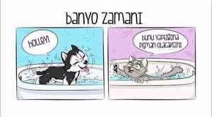 Hayvanlar Bizi Nasıl Görüyor !