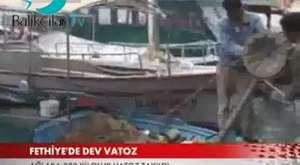 İstanbul Deniz ürünleri avcıları derneği Balıkçılığın gelişmesi yaptığı katkılardan dolayı TRT haber'e Plaket verildi. (15.02.2013)