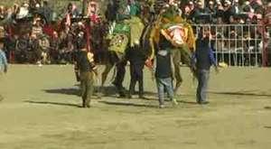 2013 Yılı Buharkent Deve Güreşi 2. Bölüm