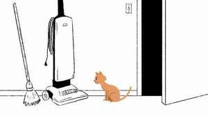 yavru kedi sesi miyav miau